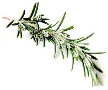 How To Store Fresh Rosemary Fresh Rosemary Rosemary Sprigs Freezing Herbs