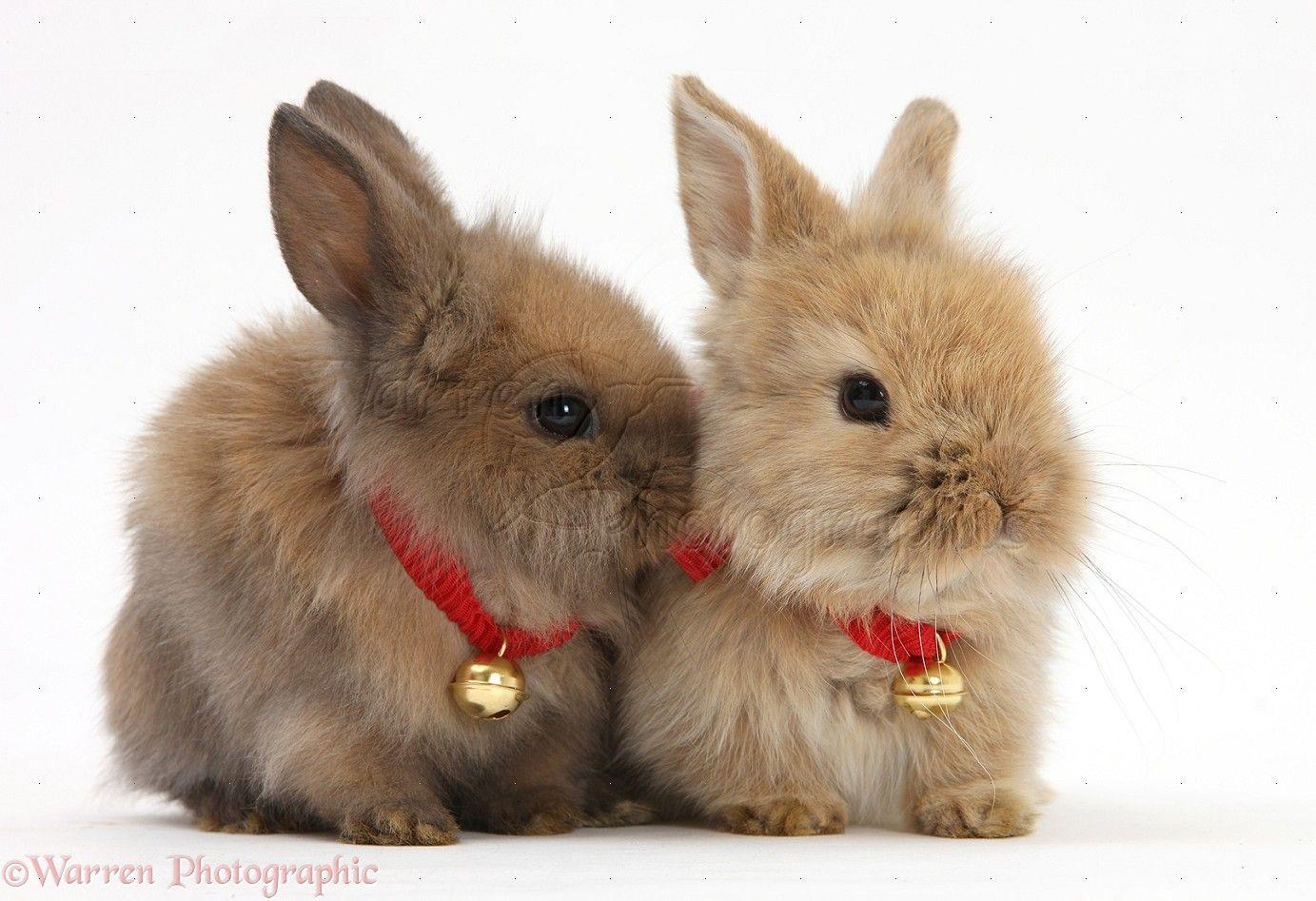 Bunnies with bells cute baby bunnies christmas animals