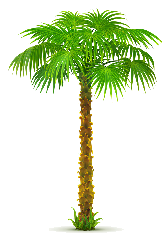 arbre png tree pinterest plantes tropicales palmiers et gabarit. Black Bedroom Furniture Sets. Home Design Ideas