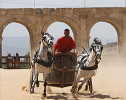 Live authentic replica Roman chariot races in the