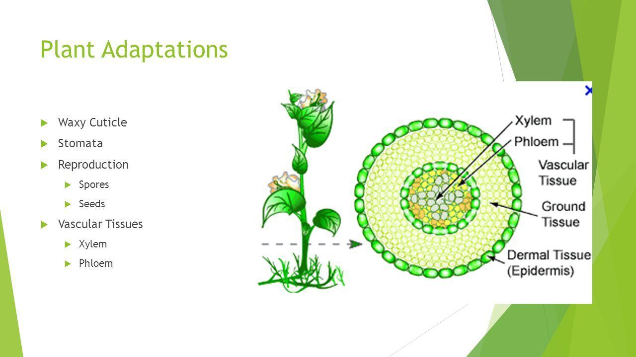 plant adaptation stomata diagram wiring library | pic