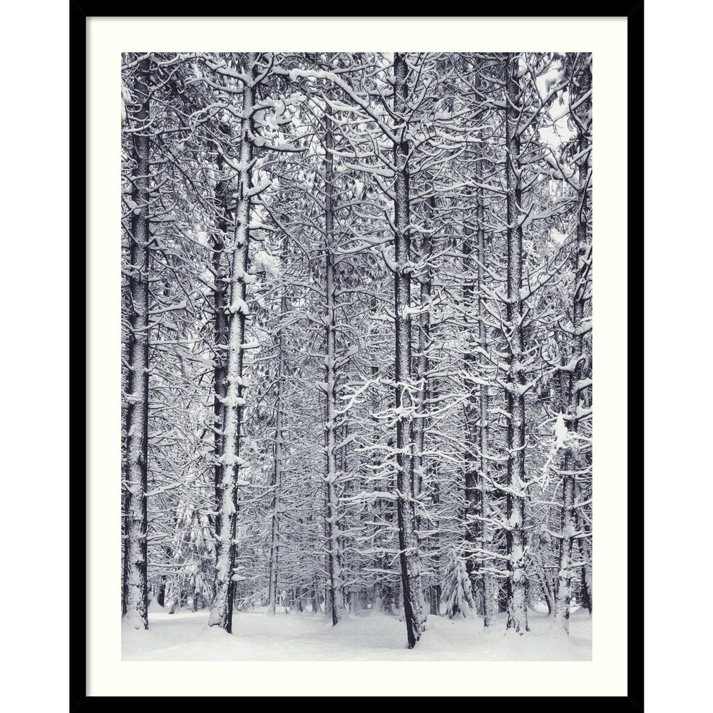 Ansel Adams \'Pine Forest in the Snow, Yosemite National Park\' Framed ...