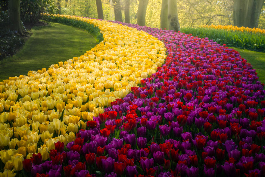 The Most Beautiful Flower Garden In The World Has No Visitors For The First Time In 71 Years And I Got To Capture It 31 Pics In 2020 Beautiful Gardens Most