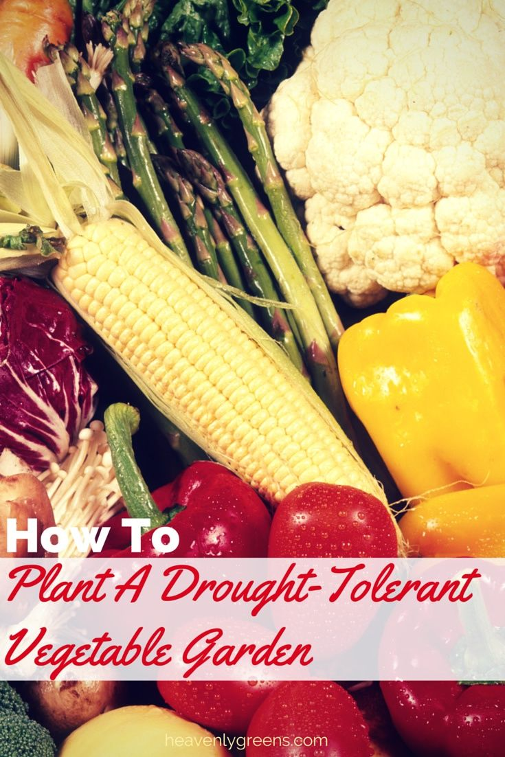 Drought Tolerant Vegetables For Your Garden With Images 400 x 300
