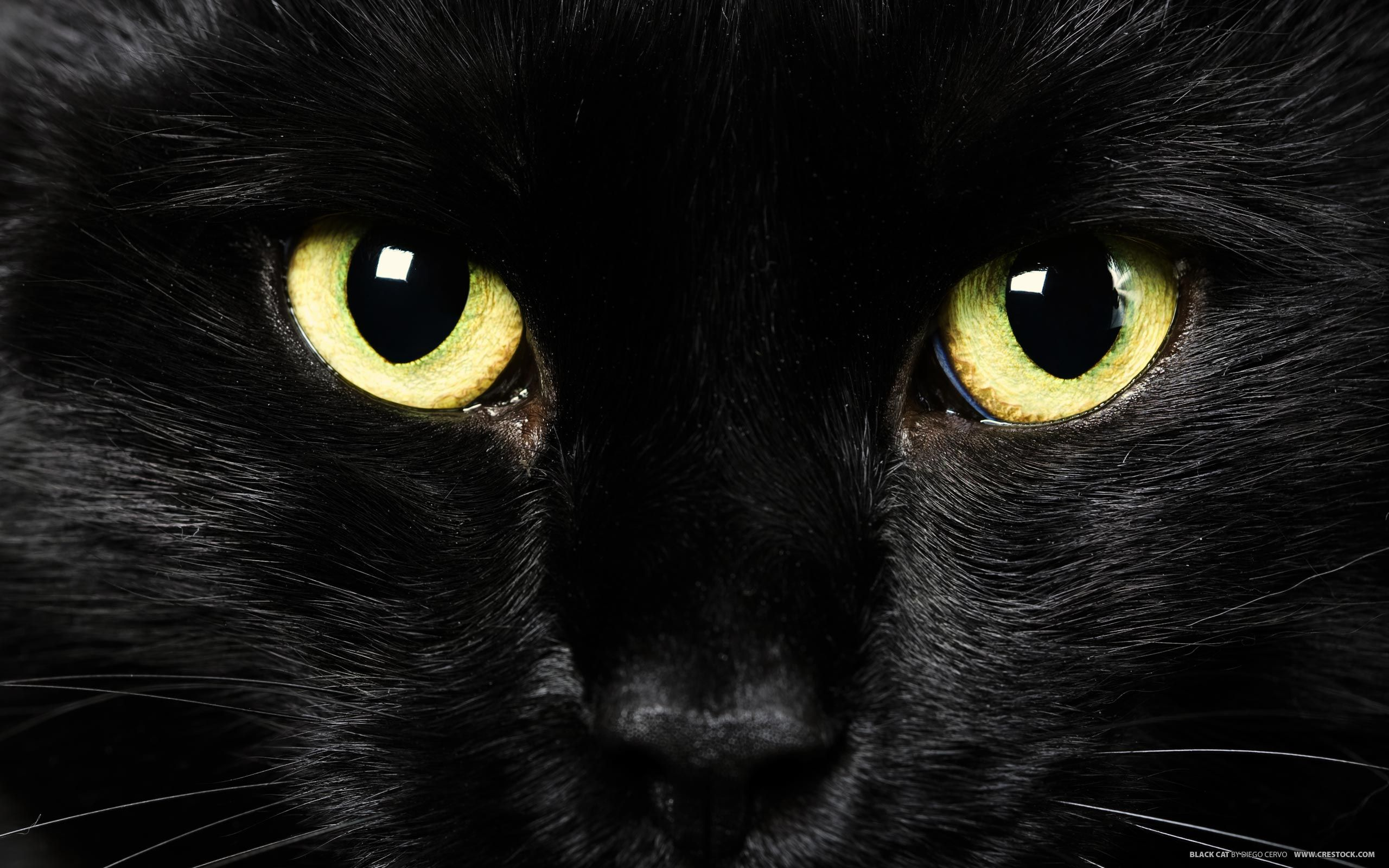 HD Wallpapers bLACK Cat Images Black cat superstition