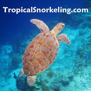 Find the best snorkeling spots in Hawaii, Florida Keys