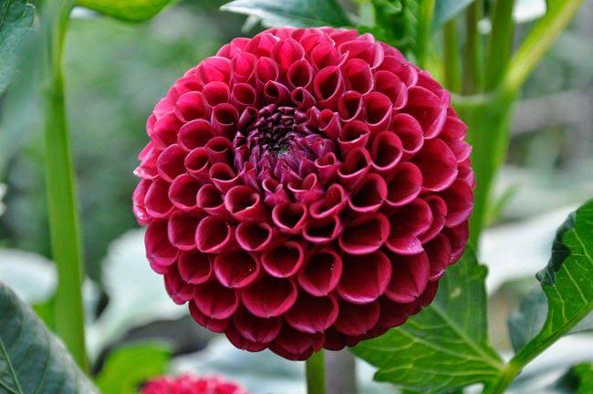 Marsala A Splash For Your Garden Perrenial Flowers Garden Flower Beds Flower Pots