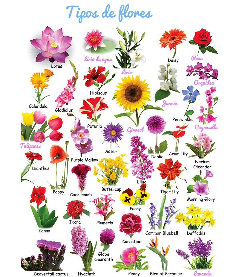 Imagen Relacionada Nombres De Flores Flores Tipos De Flores