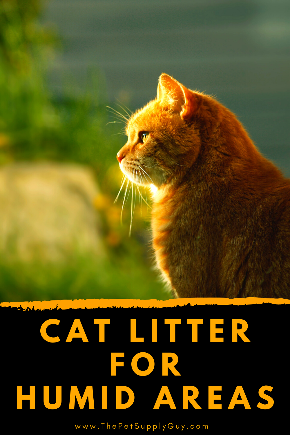 Best Cat Litter For Humidity The Pet Supply Guy In 2020 Best Cat Litter Cool Cats Cat Litter