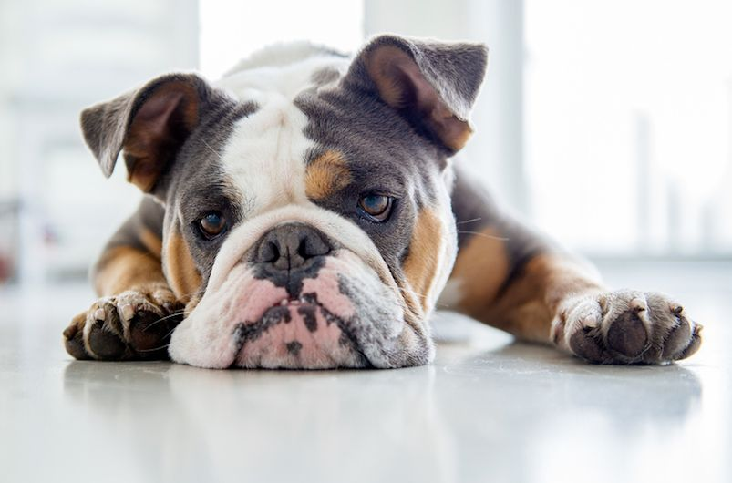 Tummy Troubles What To Know About Dog Diarrhea Dog Has Diarrhea