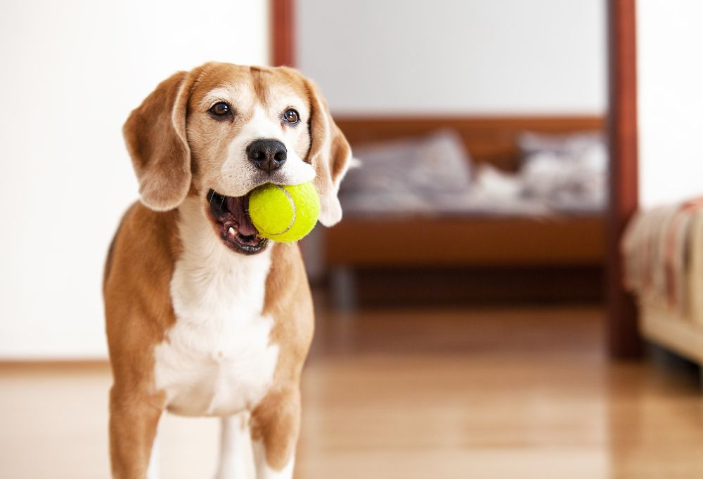 This Ball Lets Your Dog Play Fetch With Themselves Dogs Smart