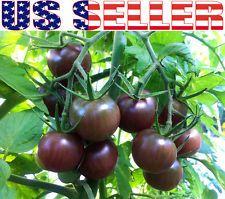 Heirloom Tomato Seeds Ebay Black Cherry Tomato 400 x 300