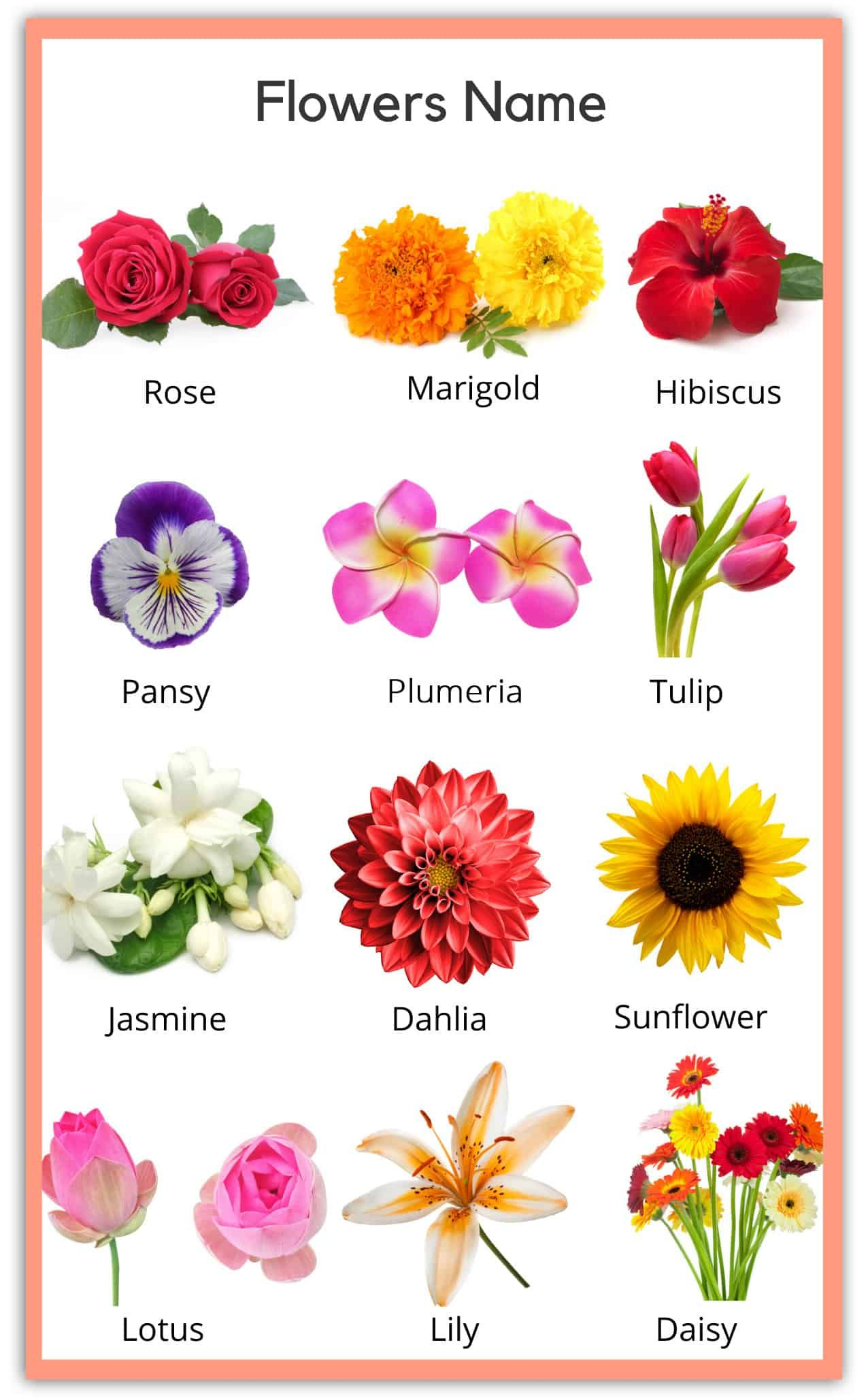 Flowers Name in English Pictures in 2020 Flower chart