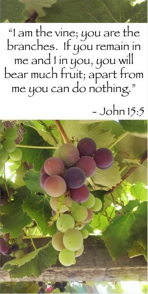 I am the vine, you are the branches... | Bible fruit, Devotional quotes, Vines