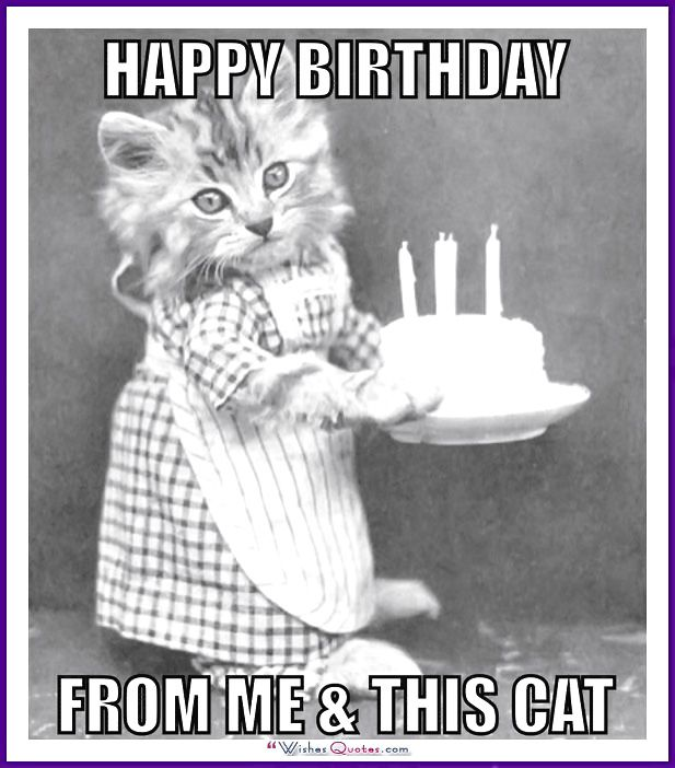 Happy Birthday Memes With Funny Cats Dogs And Animals Happy Birthday Cat Cat Birthday Cards Funny Cat Birthday Memes