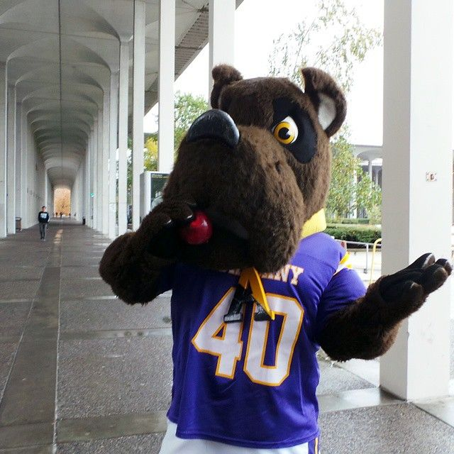 Our Mascot Damien The Great Dane And The Ualbany Community Took A
