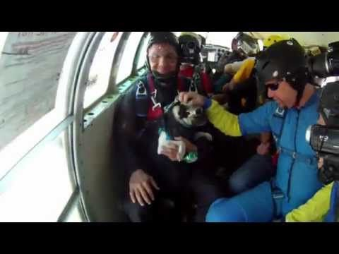 Pug Skydiving He S Living The Bucket List Life Bucket List Life Life Video Video New