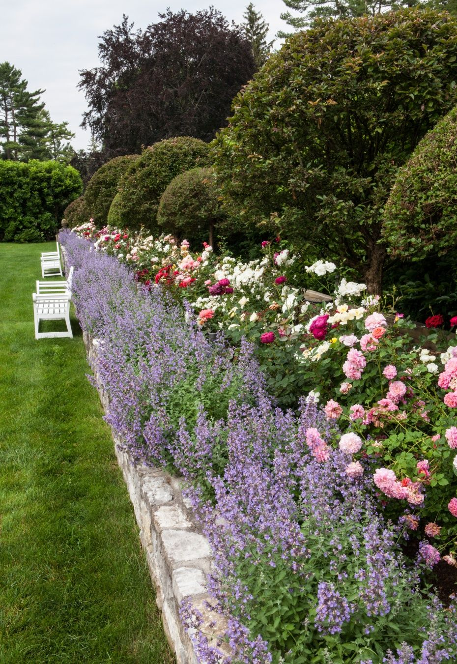 Country backyard landscaping ideas - Lavender And Rose Garden For The Back Patio Wonder If The Lavender Will Help Keep