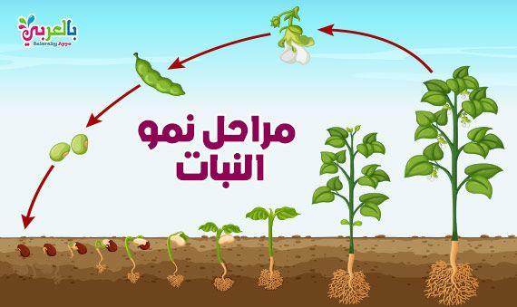 اوراق عمل الكائنات الحية والغير حية للأطفال نشاط الفرق بين الكائنات الحية والغير حية بالعربي نتعلم Plants Baby Mobile