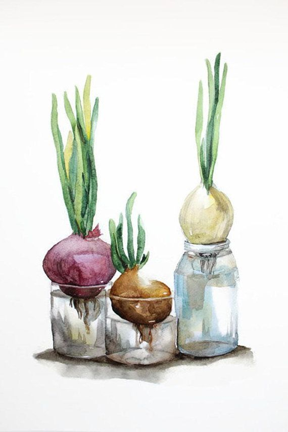 Original Watercolor Onion Onions In A Bottle Watercolor