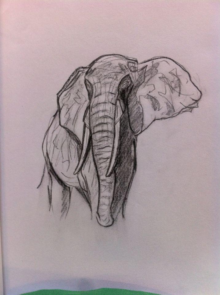 Elefante No. 20