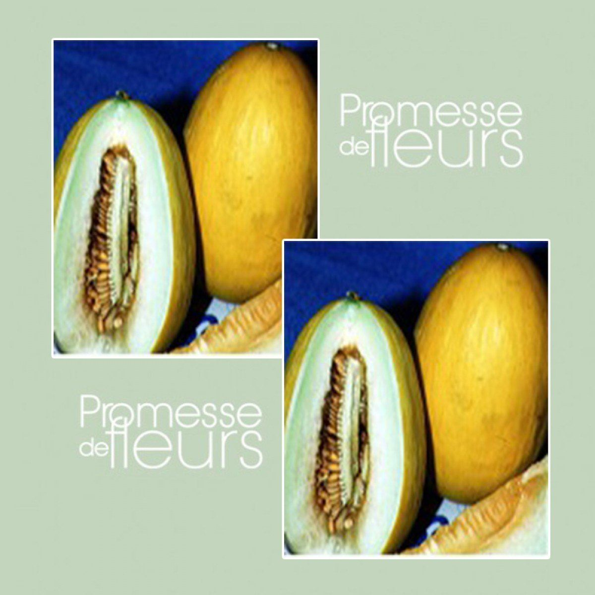 Melon Jaune Canari 2 Graines Bio Cucumis melo en 2020