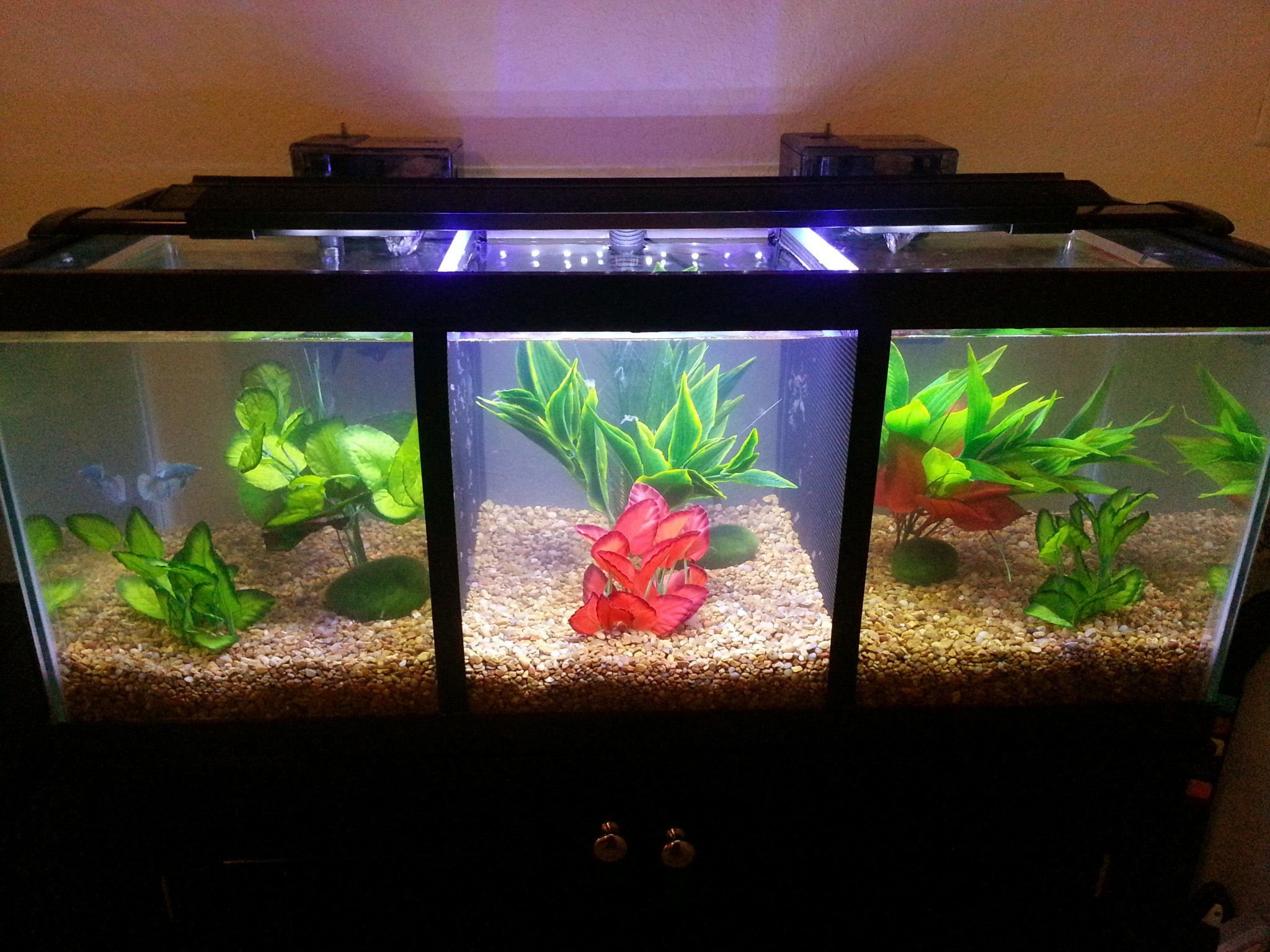 divided betta tank betta tank betta and fish