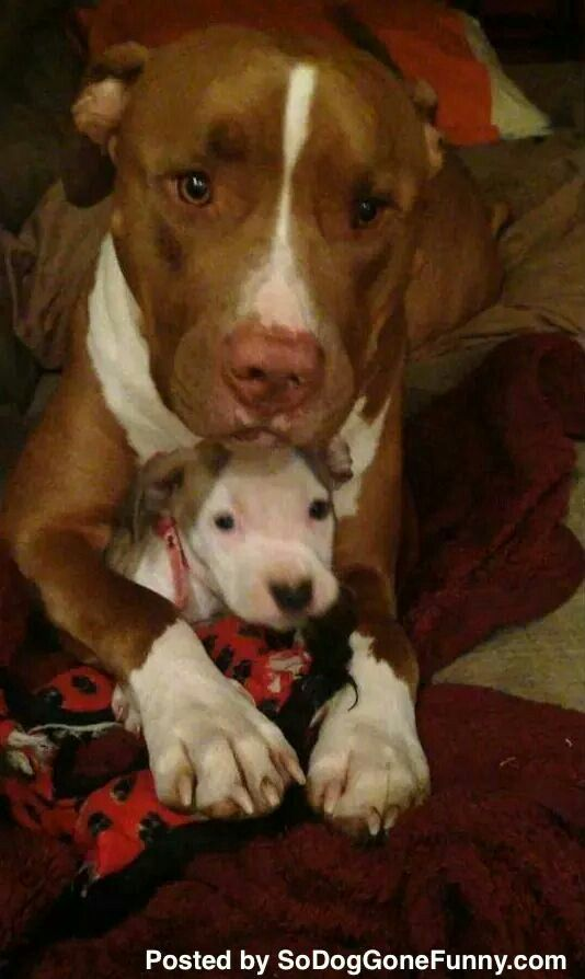 Proud Mama Cute Animals I Love Dogs Cute Dogs