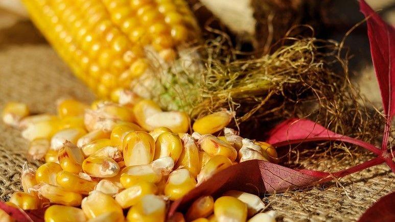 onbewerkte mais maakt deel uit van het beste dieet ter wereld