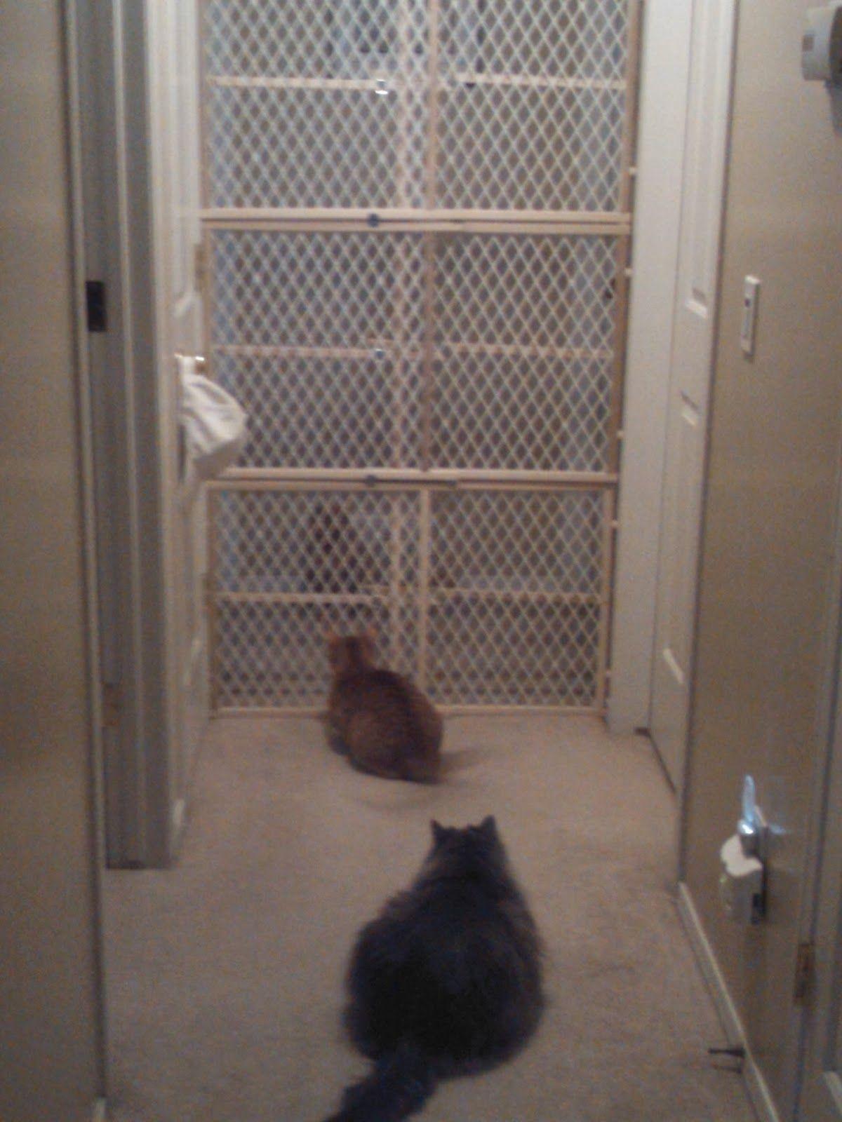 Baby Gate Cat Door