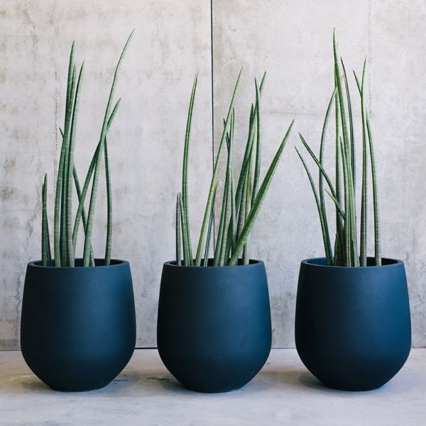 New Willow Range Of Contemporary Pots With Images Flower