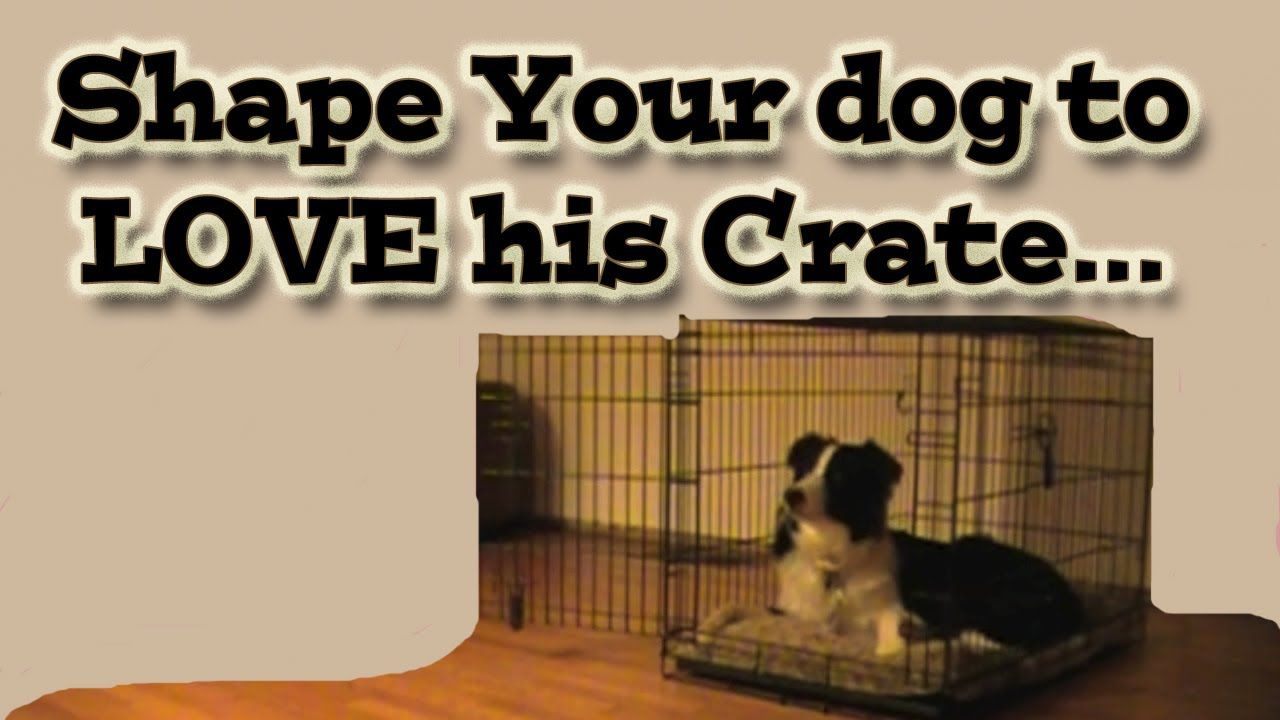 Dgs Shaping Your Dog To Love His Crate Clicker Training