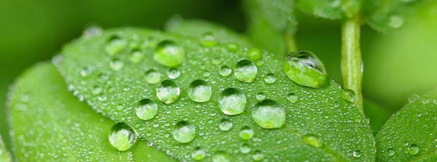 Wallpaper Facebook Cover Water Drop On Green Leaves 851 X 315 Wallpaper Nature Flowers Wallpaper Photo Gallery Green Nature