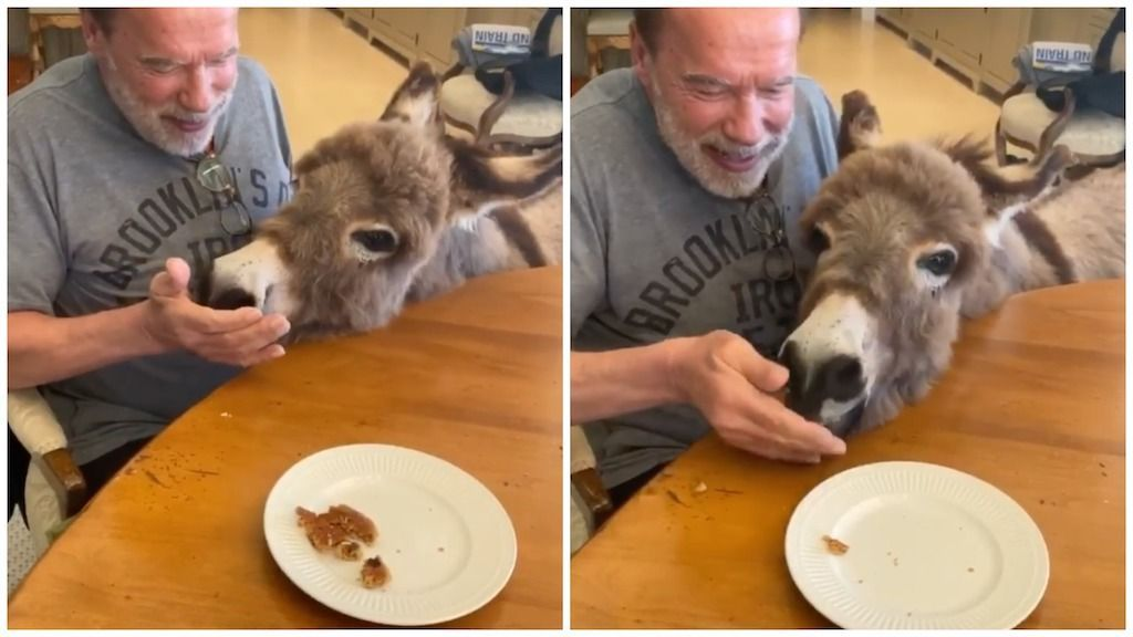 Arnold Schwarzenegger Sings Happy Birthday To His Pet Donkey Lulu To Celebrate Her First Birthday In 2020 Pet Donkey Pets Animal Lover