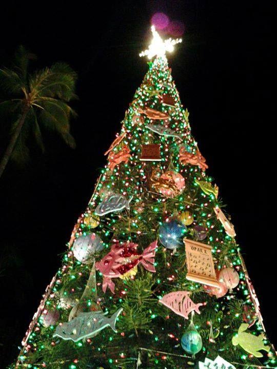 The Big Christmas Tree at Honolulu Hale in Downtown Honolulu, Oahu