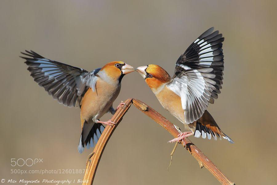 Kiss de maxmagphotography