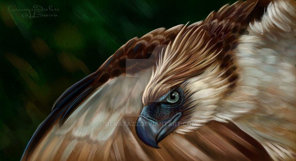 Pin by sara arruda on Fotos de animais Animals, Eagles