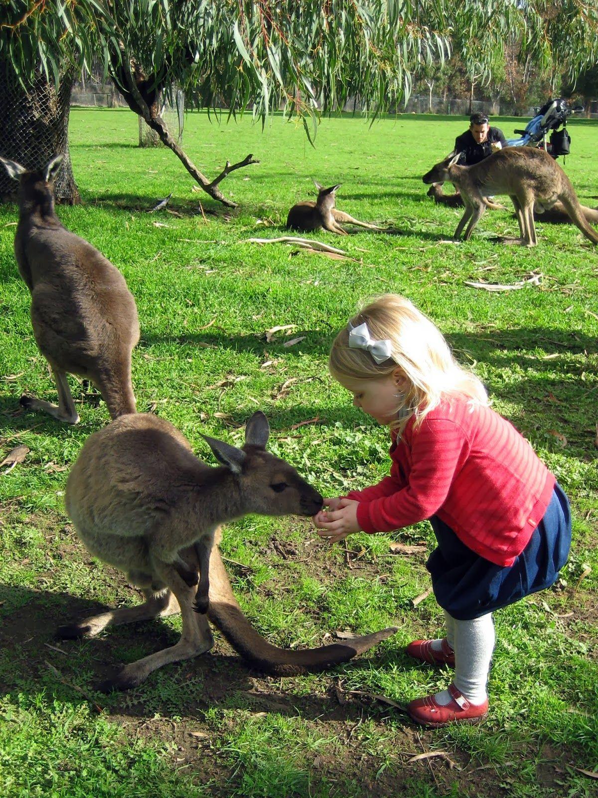 Cleland Wildlife Park South Australia Adelaide Pinterest