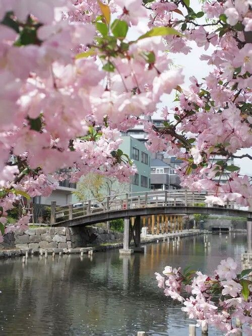 Pretty Pink Cherry Blossom Trees Surround A Building Cherry Blossom Nature Beautiful Landscapes