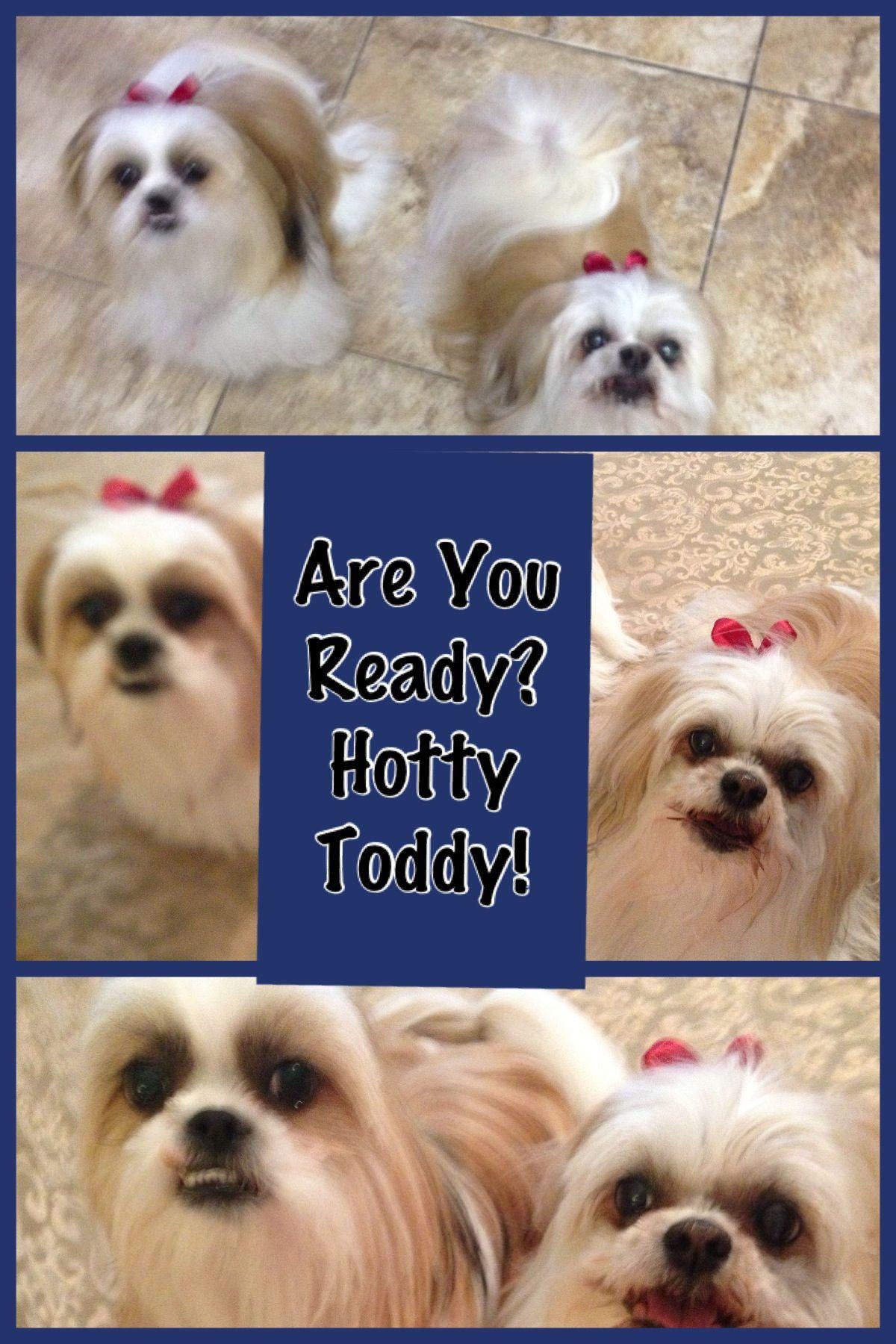 Hotty Toddy Ready  www.vrichardson.myrandf.com