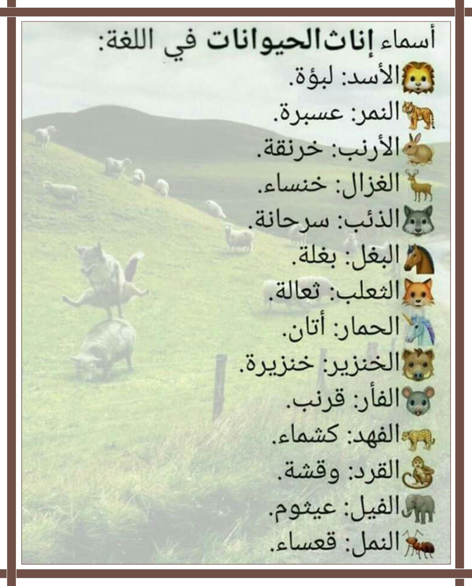 اسماء إناث الحيوانات Learning Arabic Knowledge Quotes Arabic Words