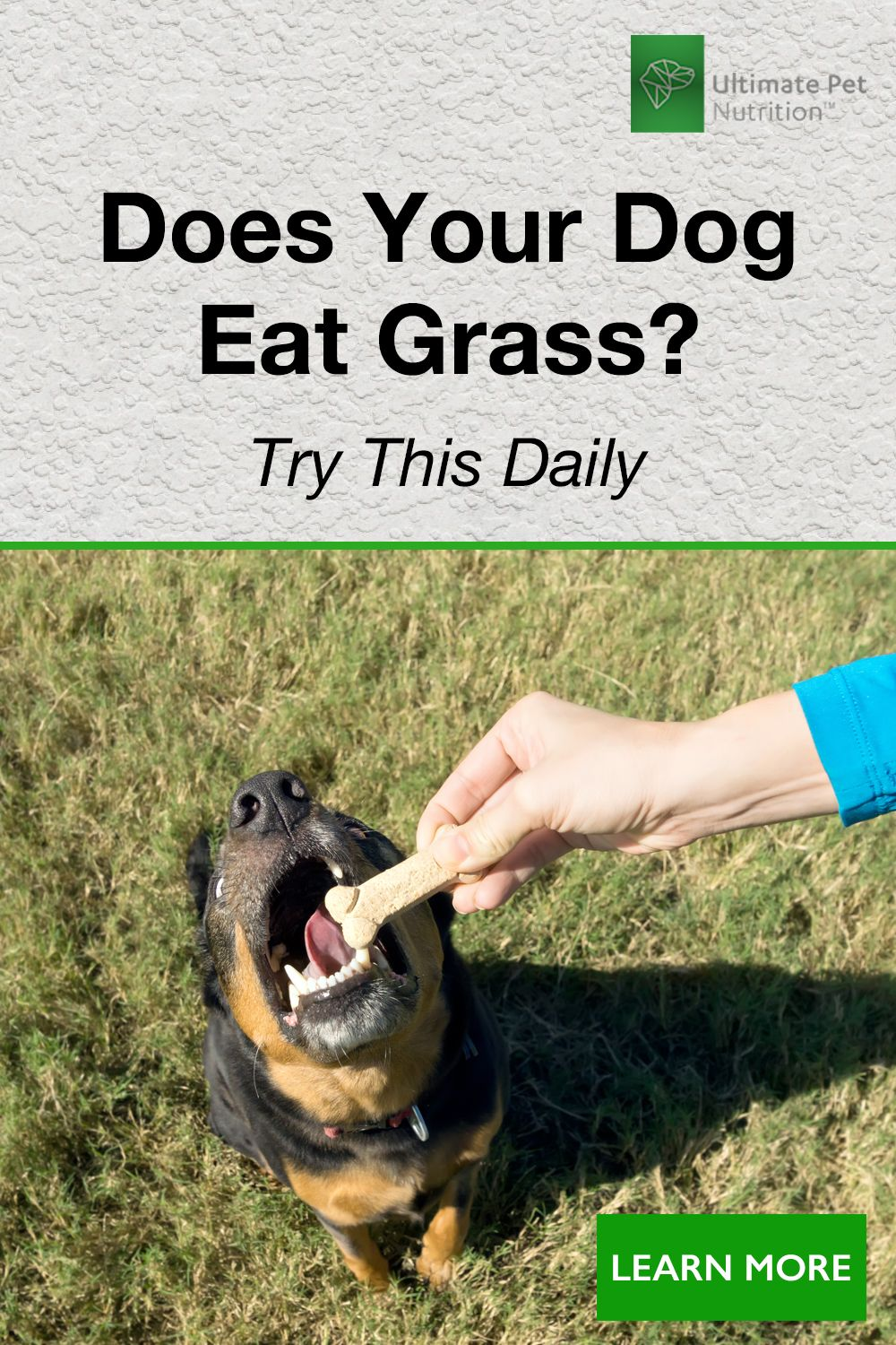 Does Your Dog Eat Grass Nutrathrive Animal Nutrition Your Dog