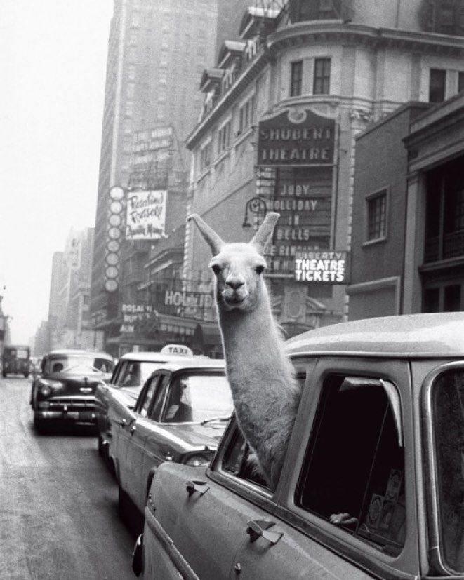A llama in #TimesSquare in 1957 one of many fantastic historic photos from our cover story on Times Square online now  see link in bio. : Inge Morath/The Inge Morath Foundation/Magnum Photos. by nymag