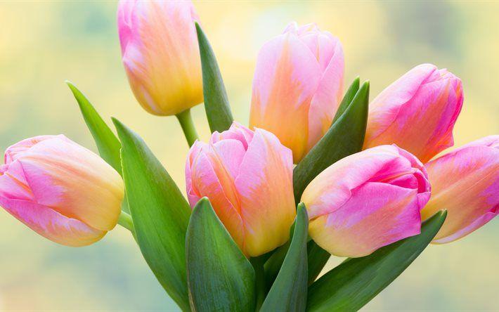 Download Wallpapers Pink Tulips 4k Spring Flowers Pink Flowers Tulips Besthqwallpapers Com Flowers Spring Flower Bouquet Yellow Tulips