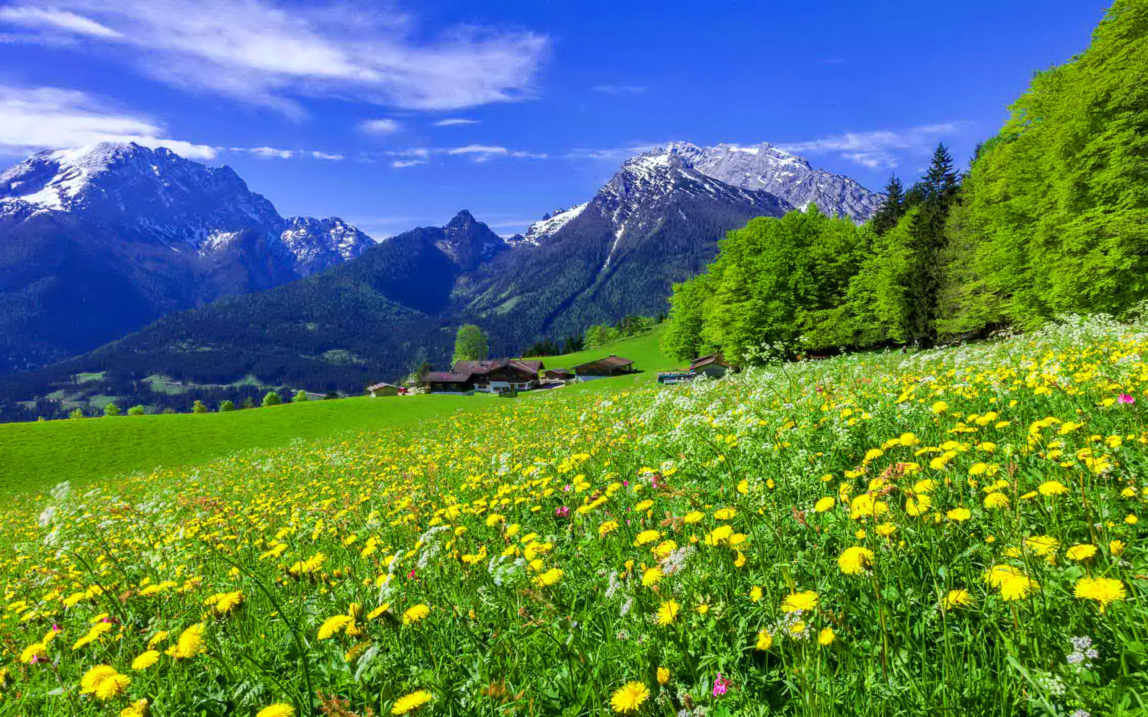 Beautiful Mountain Flowers Mountain Meadow Landscape With Beautiful