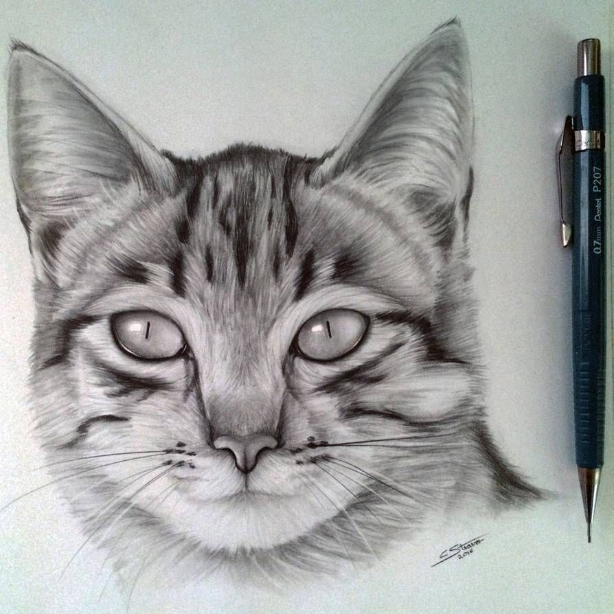 Cat Drawing By Lethalchris On Deviantart In 2020 With Images