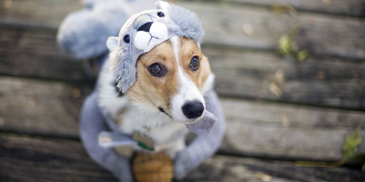 Pet Halloween Costumes So Cute You'll Cry