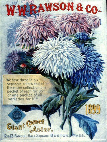 Seed Art | Art-Vintage Seed Packets