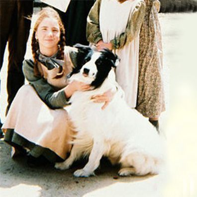 Dog From Little House On The Prairie Looked Like A Cross Between A