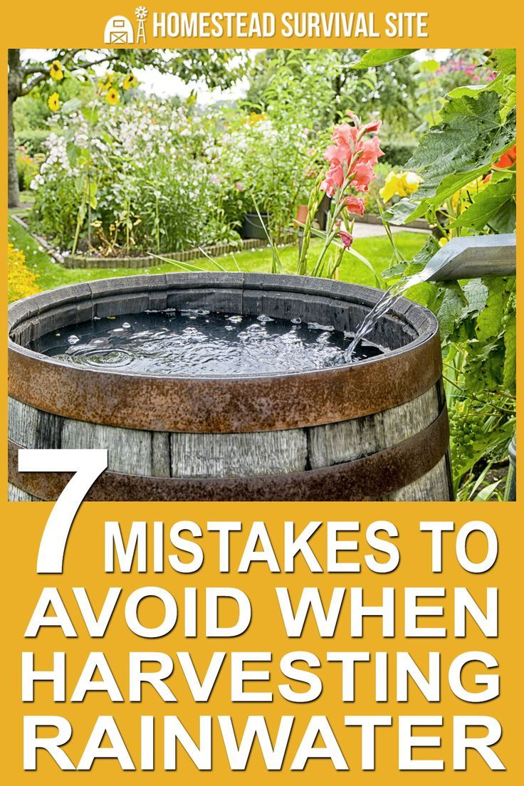7 Mistakes to Avoid when Harvesting Rain Water | Greenhouse
